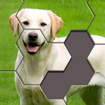 Hexa Jigsaw Puzzle™ APK MOD (Unlimited Money) 29.02