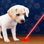Laser Pointer for Dogs APK MOD (Unlimited Money) 4.5.2