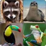 Animals Memory Game APK MOD (Unlimited Money) 2.0