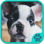 Cute Dog Games free APK MOD (Unlimited Money) 5.22.020
