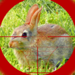 Sniper Rabbit Hunting 3D APK MOD (Unlimited Money)1.6