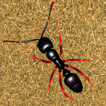 Ant Insect Games – Queen Fire Ant Simulator APK MOD (Unlimited Money)